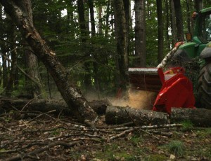 SEPPI Midi Forest